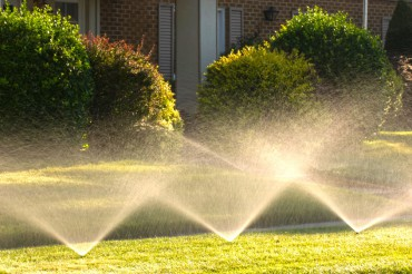Save Water with No Lawn Sprinklers